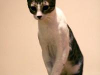 kittens_0048
