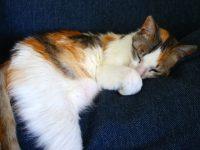 kittens_0108