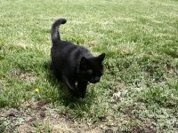 cats_0032