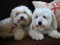 dogs_0098